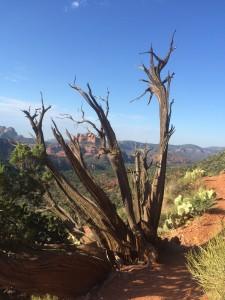Pics 2015, Brazil, Arizona, Highwood Backpacking 1034